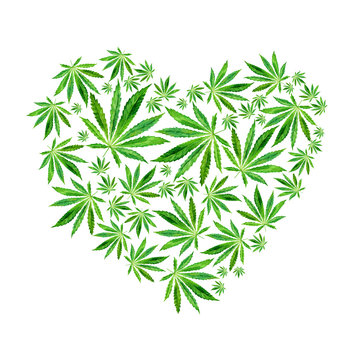 Heart of Bright green cannabis sativa leaves