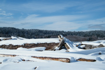 Driftwood Shelter Covered in Snow