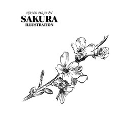 Hand drawn sakura isolated on white background. Flowers sketches elements. Retro hand-drawn floral vector illustration.