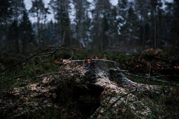 Tree cut in the forest. Save the forest concept.