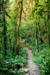 The path in the woods. Tropical forest
