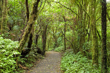 Forest, New Zealand