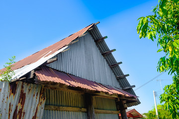 old rusty galvanized sheet (zinc sheet) building with green tree