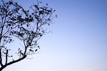 Tree silhouette with blue sky and cloud