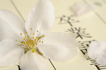 サクラの花びらと卒業証書