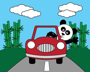 panda driving a car