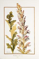 Ilustracja botaniczna złote liście
