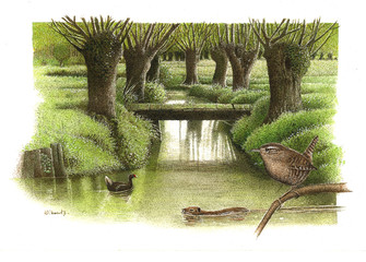 Illustration / Marais poitevin
