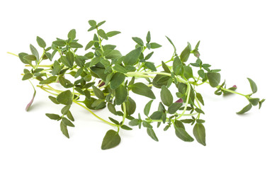 Thyme fresh herb isolated on white background