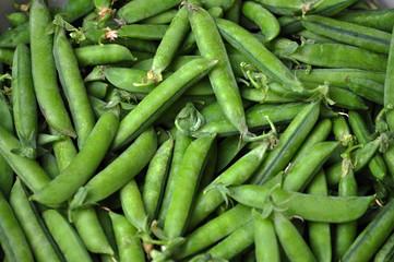 Ripe pods of green peas in bulk