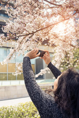 Young woman tourist take pictures sakura - cherry blossoms