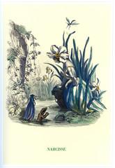 Papiers peints Narcisse Illustration / Les fleurs animées de Grandville / Narcisse
