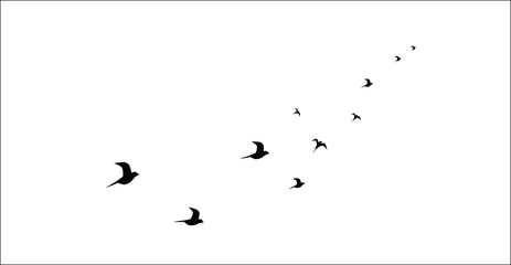 silhouettes of flying birds isolated on white background vector image
