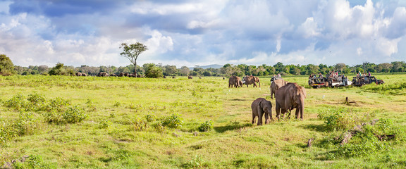 Panorama with elephants and jeeps safari