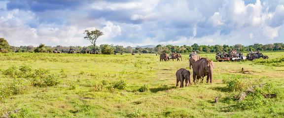 Panorama with elephants and jeeps safari