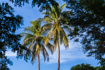 Palm trees seen from a dry forest