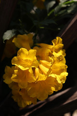Delicate Exotic Yellow Flowers