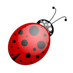 red black ladybug