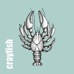 crayfish vector illustration