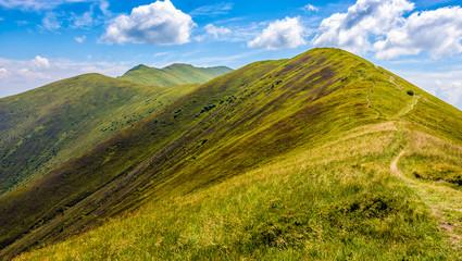 path through a meadow on hillside