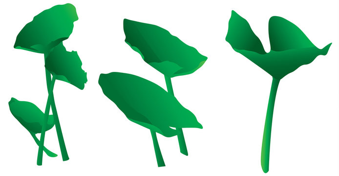 Variety of isolated simple green lily pads or aquatic plants clip art