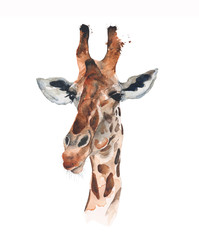 Giraffe head portrait watercolor illustration isolated on white background