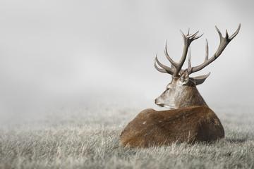 Door stickers Deer Deer in Fog