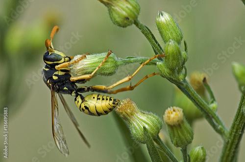 Bộ sưu tập côn trùng 2 - Page 13 500_F_136695883_syh8Ebmn6vO2p7y7DZqkl68xYl4vsu4b