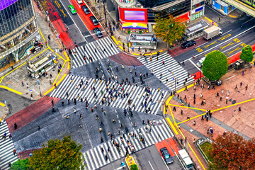 Fototapete - Aerial view of Shibuya District and Shibuya Crossing, Tokyo.