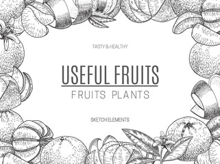 Vector design of hand drawn mandarins. Vintage sketch style illustration. Organic eco food. Whole , sliced pieces half,leaves and flowers leave . Fruit engraved .