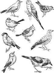 sketches of the wild birds