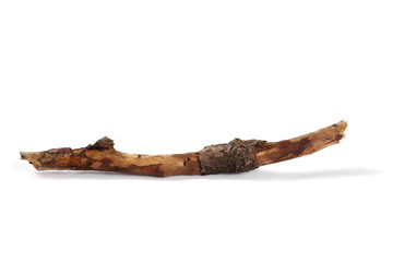 dry rotten branch apple tree isolated on white background