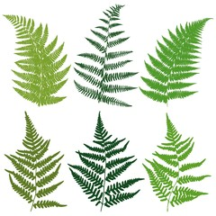 A set of silhouettes fern leaves. Vector.