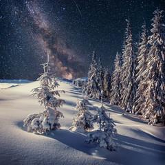 Dairy Star Trek in the winter woods. Carpathians, Ukraine, Europ