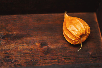 orange flower of physalis on vintage wooden background. Free space for text