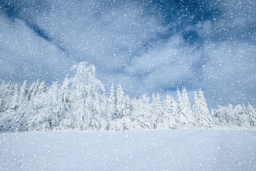 Dramatic wintry scene. Carpathian, Ukraine, Europe. Bokeh light
