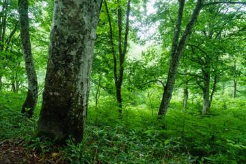 雨に濡れた森