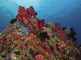 Tropical Sescape, Buntes Korallenriff