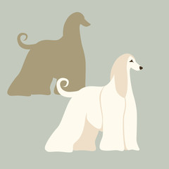 Afghan hound dog vector illustration style Flat
