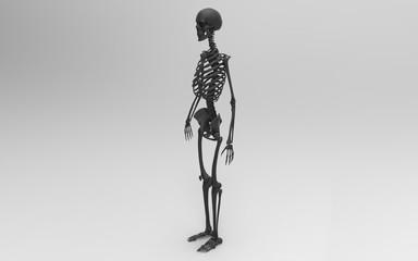 3D Illustration Of A Human Skeleton