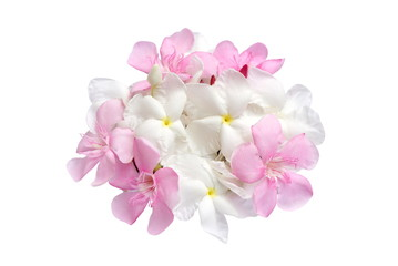 pink and white flower bouquet isolated on white background