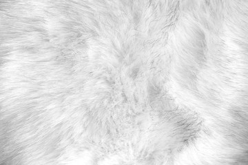 white artificial fur texture Wall mural