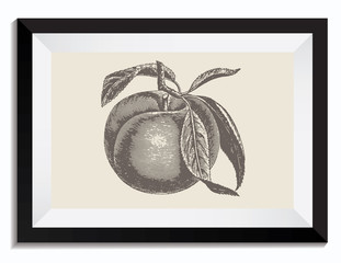 Vintage Retro Vector Drawing Illustration of an Apple with Leafs in a Frame
