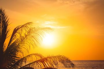 Palm tree at beautiful sunset. Phuket, Thailand.