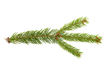 Coniferous branch. Isolated on white background. Green twig on white background. Coniferous twig, graphic template. Coniferous branch, graphic element. Branch on white background.