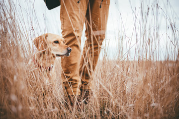 Hiker and dog in grassland