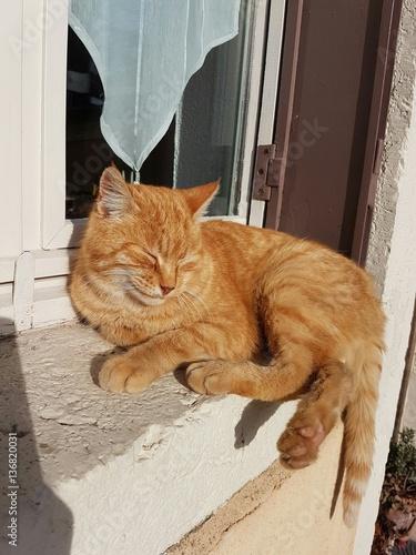 Magnifique chat roux pos sur le rebord d 39 une fen tre for Poser une fenetre