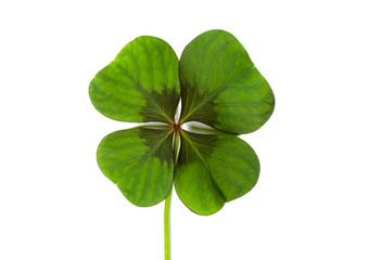 Glückssymbol Glücksklee, vierblättriges Kleeblatt