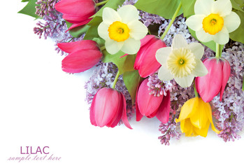 Narcissus, lilac flowers and tulips background isolated on white with sample text