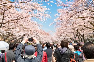 Japanische Kirschblüte im Ueno Park Wall mural